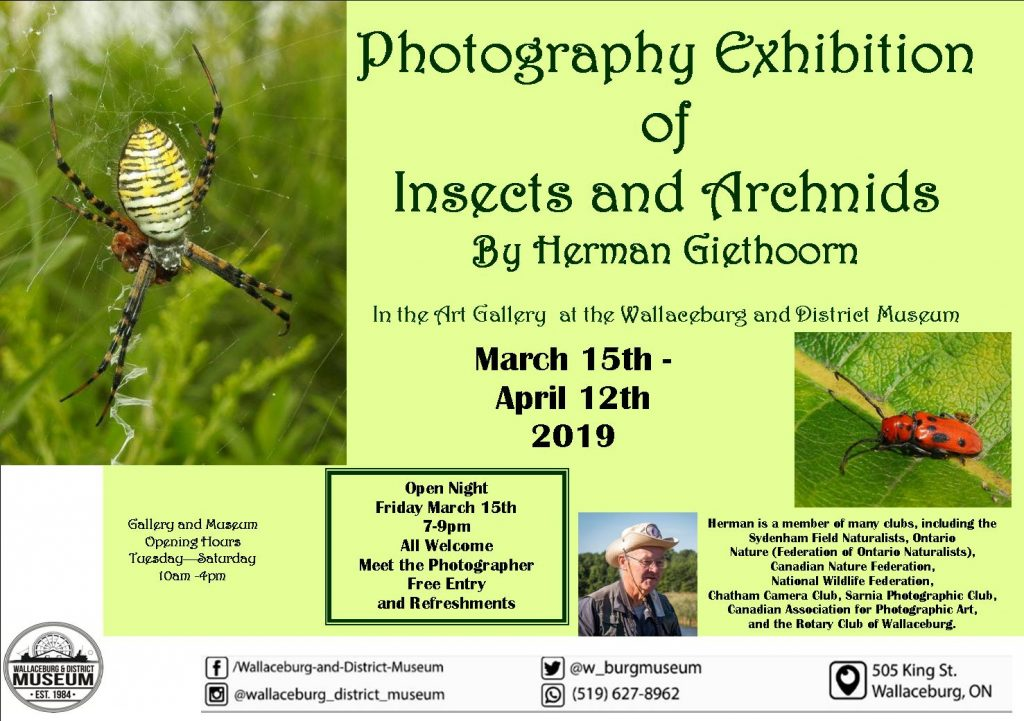 Insects and Arachnids Photography Display