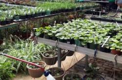 RDHS Annual Plant Sale