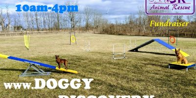 Doggy Discovery Zone Open House Fundraiser for Chatham Kent Animal Rescue